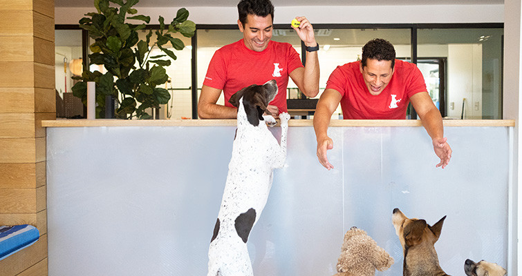 Barkin' Creek employees play with a group of dogs